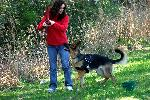 German Shepherd & Trainer